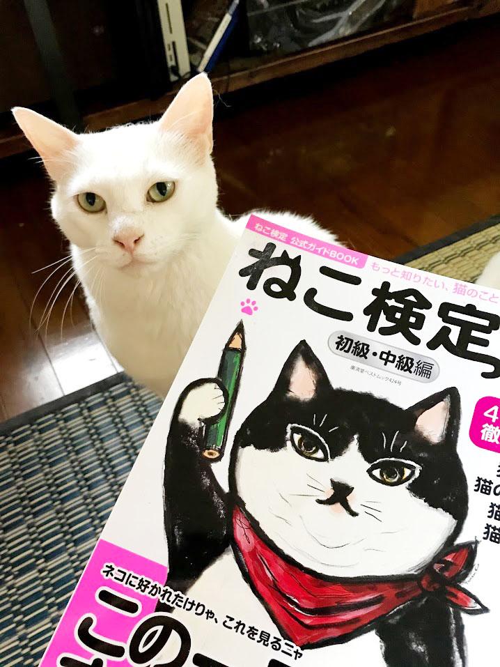 猫検定表紙