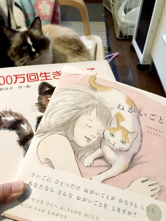 猫の感動の本たち